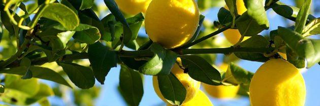 Lemon 5 Fold Essential Oil