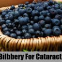 Bilberry Benefits